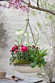 Emailleschüssel bepflanzt und als Ampel aufgehängt : Ranunculus