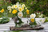 Kleine Sträuße aus Narcissus ( Narzissen ), Viola cornuta ( Hornveilchen )