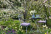 Sitzplatz vor Malus ( Zierapfel ) mit Stauß aus Tulipa 'Purissima' 'Budlight