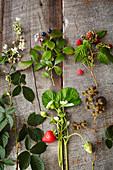 Frische Erdbeeren, Blaubeeren und Himbeeren mit Blättern