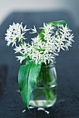Wild garlic with flowers in a glass of water