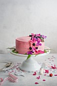 Festive blackberry sponge cake with blackberry cream on a cake stand