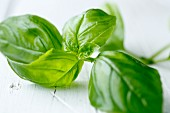 Basil leaves on a white wooden background