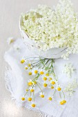 Elderflowers in a papier-mâché bowl with fresh chamomile blossoms