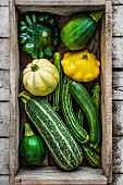 Different types of courgettes, view from above