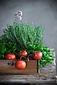 Tomaten und frische Küchenkräuter auf Holztablett