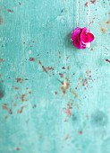 Rose petals threaded on cord against turquoise background