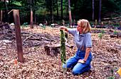 Chinese chestnut agroforestry system
