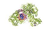 CRISPR-Cas9 gene editing complex, artwork