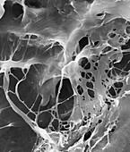 Extracellular matrix, SEM