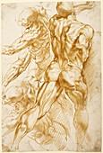 Rubens' anatomical studies