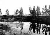 Salt Lake Oil Field, California, USA, 1906