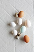 Different-coloured eggs and quail eggs