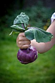 A woman holding purple kohlrabi