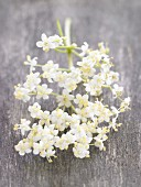 Elderflowers on the stem
