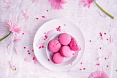 Pink macarons and pink daisies