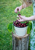 A small girl standing over a bucket of cherries