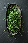 Glasswort in a metal dish