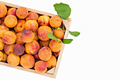 Apricots in a crate
