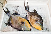 Triggerfish for sale at a fish market