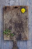 Fresh watercress and a dandelion on an old wooden chopping board