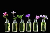 Various healing flowers in small oil bottles