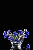 Blue cornflowers in a glass mortar