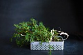 Juniper branches in a metal tin