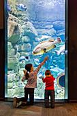 Kids visiting an aquarium