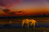 Planetary conjunction and an elephant, Namibia