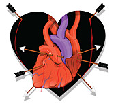 Illustration of heart with arrows