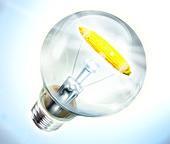 Illustration of light bulb with corn cob