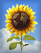 Illustration of sunflower with globe imprint