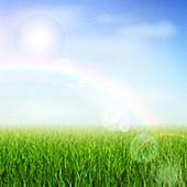 Field with rainbow, illustration