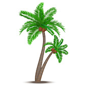 Tropical palm tree, illustration