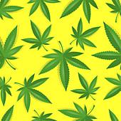 Cannabis leaves, illustration