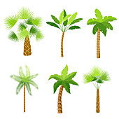 Palm trees, illustration
