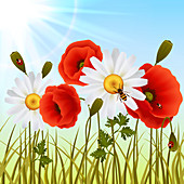 Wildflower meadow, illustration