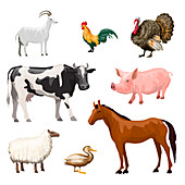 Farm animals, illustration