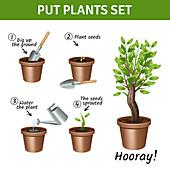 Growing plants, illustration
