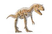 Allosaurus dinosaur skeleton, illustration