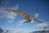 Pteranodon in flight, illustration