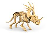Styracosaurus dinosaur skeleton, illustration