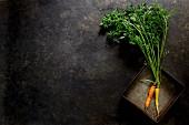 Zwei frische Karotten vor dunklem Hintergrund