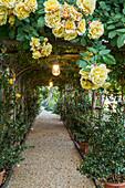 Laubengang mit gelben Rosen