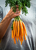 Man holding a bunch of fresh carrots