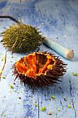 Urchin roe