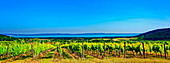 The wine-growing region next to Lake Balaton in Balatonfüred-Csopak, Hungary