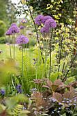 Blühender Zierlauch 'Mercurius' im Gartenbeet