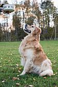 Hund wartet auf Leckerli im Garten